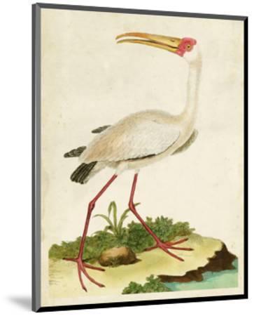 Heron Portrait VII-0 Unknown-Mounted Art Print