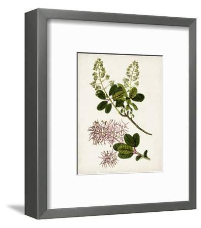 Antique Botanical Study II-0 Unknown-Framed Art Print