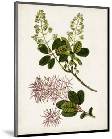 Antique Botanical Study II-0 Unknown-Mounted Art Print