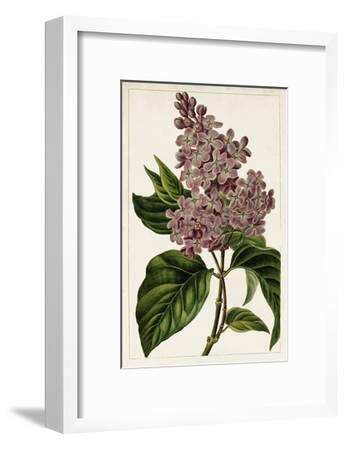 Mauve Botanicals IV-0 Unknown-Framed Art Print