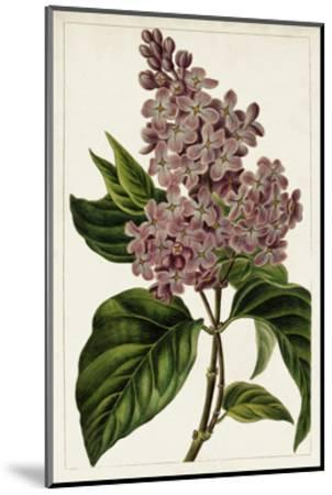Mauve Botanicals IV-0 Unknown-Mounted Art Print