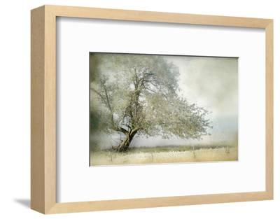 Tree in Field of Flowers-Mia Friedrich-Framed Photographic Print