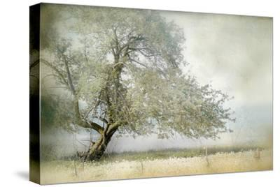 Tree in Field of Flowers-Mia Friedrich-Stretched Canvas Print