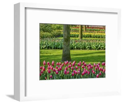 Netherlands. Spring, flowering colorful assorted flowers-Terry Eggers-Framed Photographic Print
