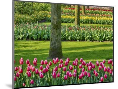 Netherlands. Spring, flowering colorful assorted flowers-Terry Eggers-Mounted Photographic Print