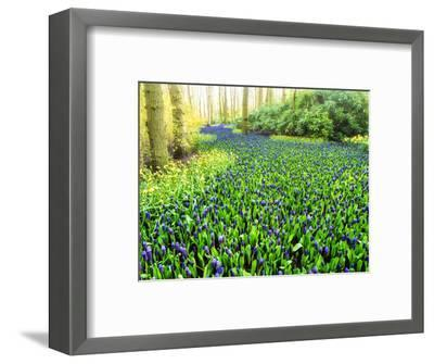 Netherlands, Lisse. Multicolored flowers blooming in spring.-Terry Eggers-Framed Photographic Print