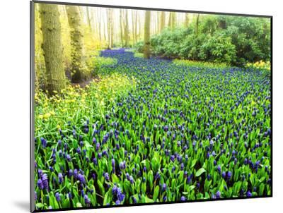 Netherlands, Lisse. Multicolored flowers blooming in spring.-Terry Eggers-Mounted Photographic Print