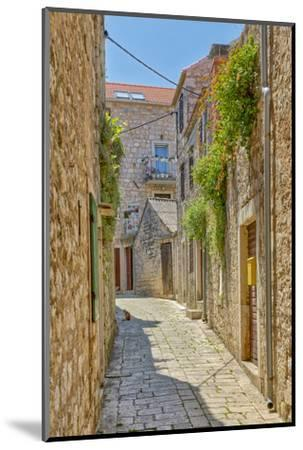 Croatia, Stari Grad. Cat in town street.-Jaynes Gallery-Mounted Photographic Print