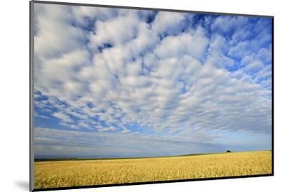 Canada, Manitoba, Holland. Wheat crop and clouds.-Jaynes Gallery-Mounted Photographic Print