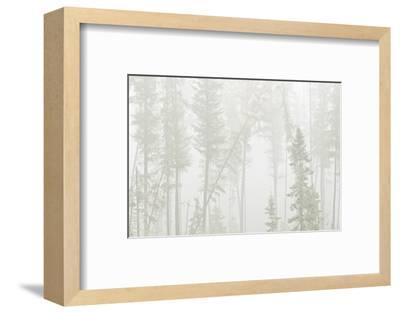 Canada, Ontario, Ear Falls. Forest in fog.-Jaynes Gallery-Framed Photographic Print