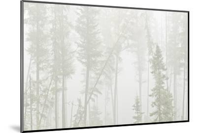 Canada, Ontario, Ear Falls. Forest in fog.-Jaynes Gallery-Mounted Photographic Print
