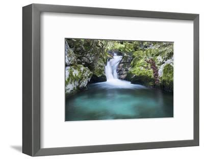 Slovenia. Small stream of pure mountain water cascades down mossy rocks.-Brenda Tharp-Framed Photographic Print