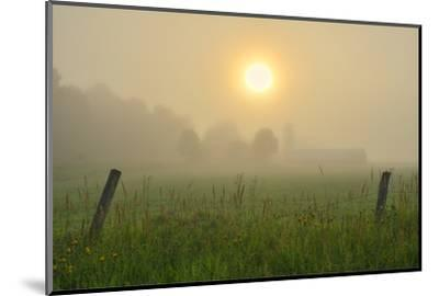 Canada, Ontario, Bourget. Farm field at sunrise in fog.-Jaynes Gallery-Mounted Photographic Print