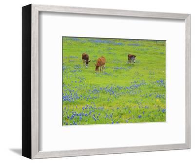 Donkey in field of bluebonnets near Llano Texas-Sylvia Gulin-Framed Photographic Print