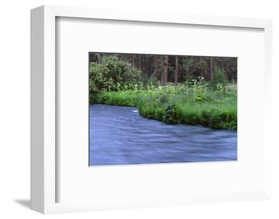 Oregon. Deschutes NF, early summer wildflowers and the Metolius River-John Barger-Framed Photographic Print