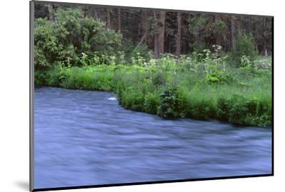 Oregon. Deschutes NF, early summer wildflowers and the Metolius River-John Barger-Mounted Photographic Print