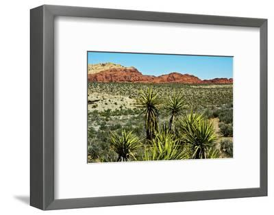 Soap tree yucca, yucca elata, Red Rock Canyon, National Conservation Area, Nevada, USA-Michel Hersen-Framed Photographic Print