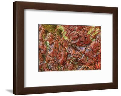 Large, naturally polished rock with lichen. Lower Deschutes River, Central Oregon, USA-Stuart Westmorland-Framed Photographic Print