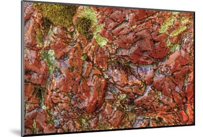 Large, naturally polished rock with lichen. Lower Deschutes River, Central Oregon, USA-Stuart Westmorland-Mounted Photographic Print