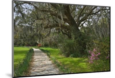 USA, South Carolina, Charleston. Stone pathway in Magnolia Plantation.-Jaynes Gallery-Mounted Photographic Print