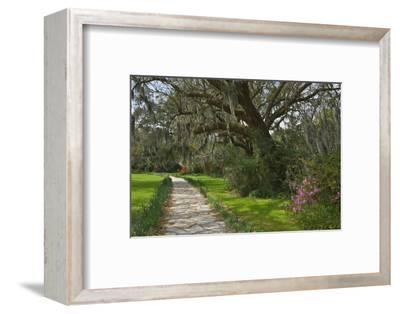 USA, South Carolina, Charleston. Stone pathway in Magnolia Plantation.-Jaynes Gallery-Framed Photographic Print