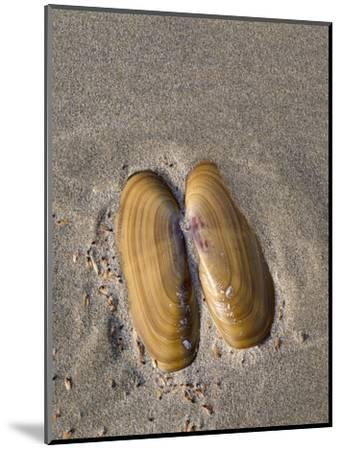 USA, Oregon, Oswald West State Park, Mussel shell and beach sand.-John Barger-Mounted Photographic Print