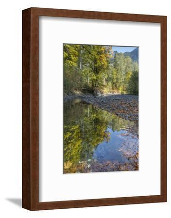 USA, Washington State, Olympic National Forest. Fall forest colors reflect in water.-Jaynes Gallery-Framed Photographic Print