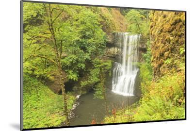 Trail of Ten Falls, Silver Falls State Park, near Silverton, Oregon-Stuart Westmorland-Mounted Photographic Print