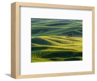 Lone tree in fields of wheat, peas and barley-Terry Eggers-Framed Photographic Print