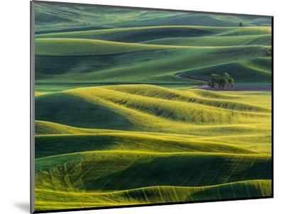 Lone tree in fields of wheat, peas and barley-Terry Eggers-Mounted Photographic Print