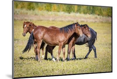 USA, Colorado, San Luis. Wild horse herd.-Jaynes Gallery-Mounted Photographic Print