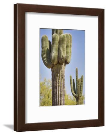 USA, Arizona, White Tank Mountain Park, Phoenix. Close-up of a Saguaro cactus.-Deborah Winchester-Framed Photographic Print