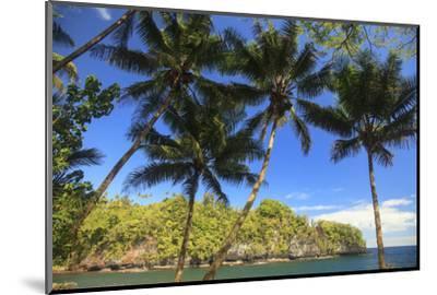 Hawaiian Tropical Botanical Gardens, near Hilo, Big Island, Hawaii, USA Palm trees.-Stuart Westmorland-Mounted Photographic Print
