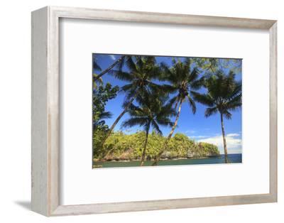 Hawaiian Tropical Botanical Gardens, near Hilo, Big Island, Hawaii, USA Palm trees.-Stuart Westmorland-Framed Photographic Print