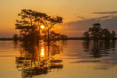 USA, Louisiana, Atchafalaya National Wildlife Refuge. Sunrise on swamp.-Jaynes Gallery-Framed Photographic Print