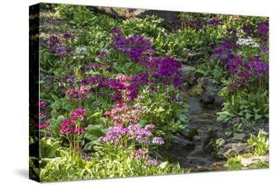 USA, Delaware, Wilmington. Brook running between rocks and flowers-Hollice Looney-Stretched Canvas Print