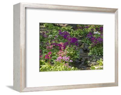 USA, Delaware, Wilmington. Brook running between rocks and flowers-Hollice Looney-Framed Photographic Print