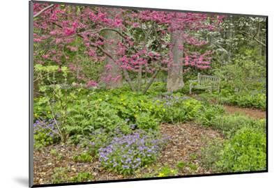 USA, Delaware, Hockessin. Flowering dogwood in the forest-Hollice Looney-Mounted Photographic Print