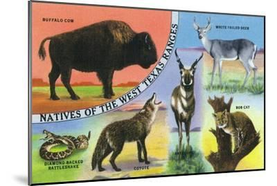 Texas - View of West Texas Natives: Buffalo, Coyote, Rattlesnake, Bob Cat, Antelope, Deer, c.1943-Lantern Press-Mounted Art Print