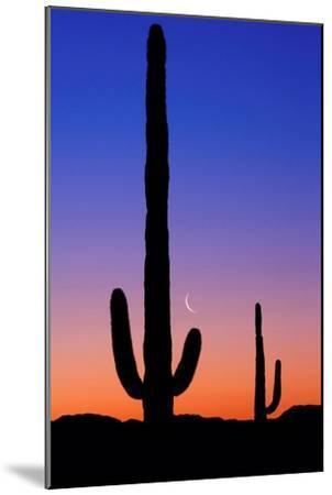 Cactus and Moon-Lantern Press-Mounted Art Print