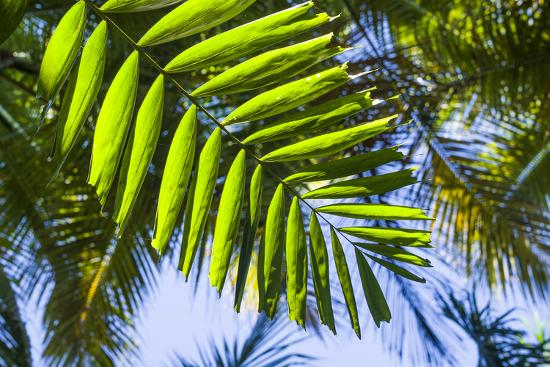 U.S. Virgin Islands, St. Thomas. St. Peter, tropical vegetation-Walter Bibikow-Photographic Print