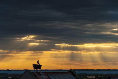 Austria, Burgenland, Morbisch at Sunrise