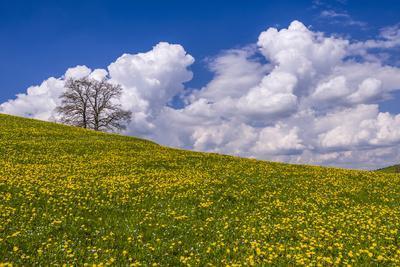 Germany, Bavaria, Upper Bavaria, F?nfseenland, Jenhausen, Municipality Seeshaupt, Spring Scenery