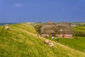 Germany, Schleswig-Holstein, North Frisia, Island of Pellworm, Alter Koog by Udo Siebig