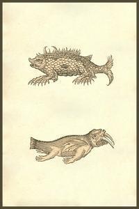 Hog & Elephant Sea Monsters by Ulisse Aldrovandi
