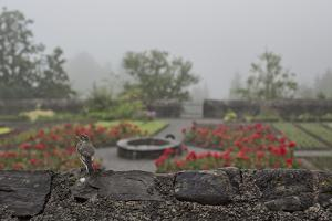 A Bird on a Rock Wall Overlooking an Herb Garden on a Foggy Rainy Day by Ulla Lohmann