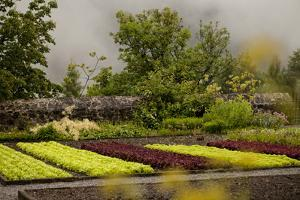 A Colorful Vegetable Garden for the Kitchen on a Foggy, Rainy Day by Ulla Lohmann