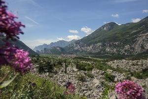 Rock Slide of Dro, with Red Valerian Flowers, Centranthus Ruber, in the Sarca Valley by Ulla Lohmann