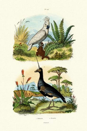 Umbrella Cockatoo, 1833-39--Giclee Print