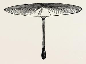 Umbrella for Hawks